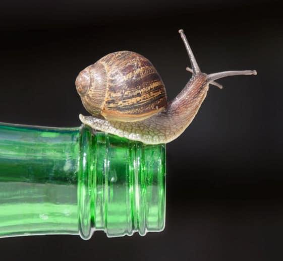 snailbottle